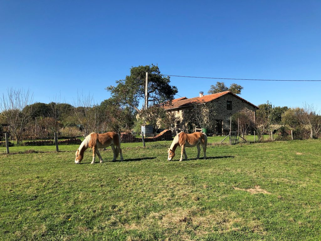 paarden voor Le Douvet