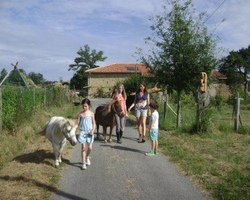 Lopen met de ponies