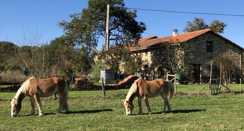Paarden voor boerderij