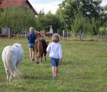 kinderen met ponies