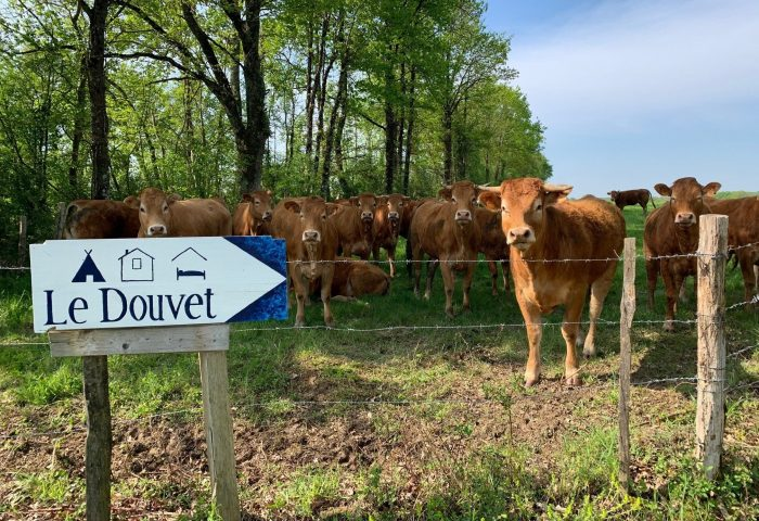 koeien ledouvet