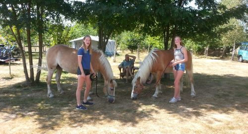 paarden camping