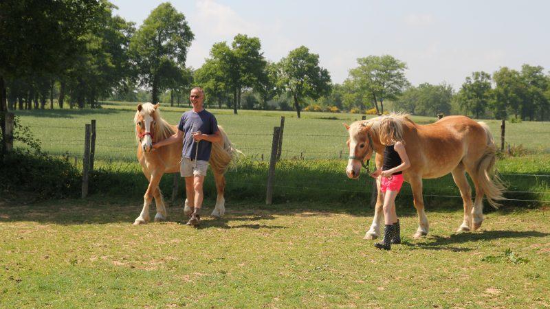 paardentemmen
