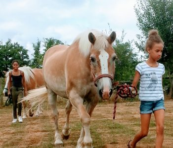 paardenwandeling